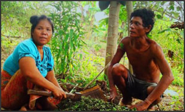 Miljø og klimarettferdighet i Kambodsja
